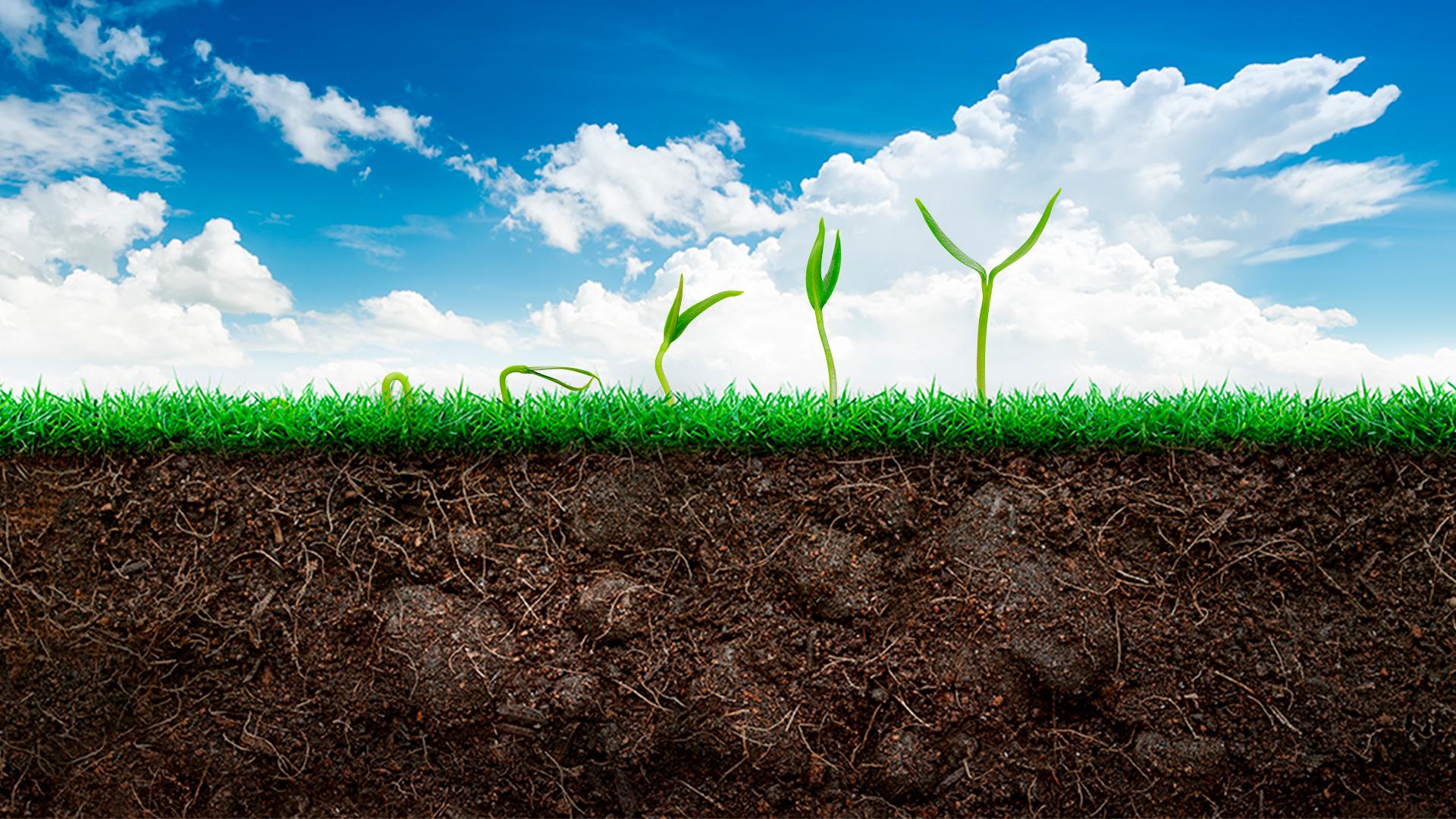 Você sabe o que é a Agricultura Sintrópica?