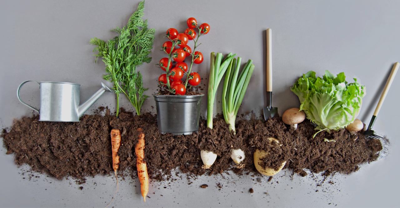 5 passos para criar uma horta em casa na quarentena
